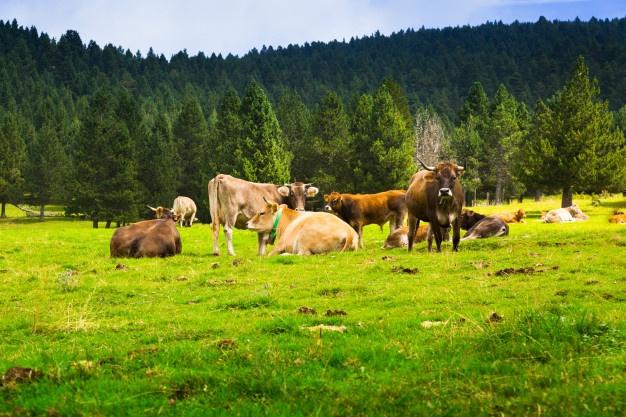 Pašna oprema je potrebna za naravno vzrejo domačih živali